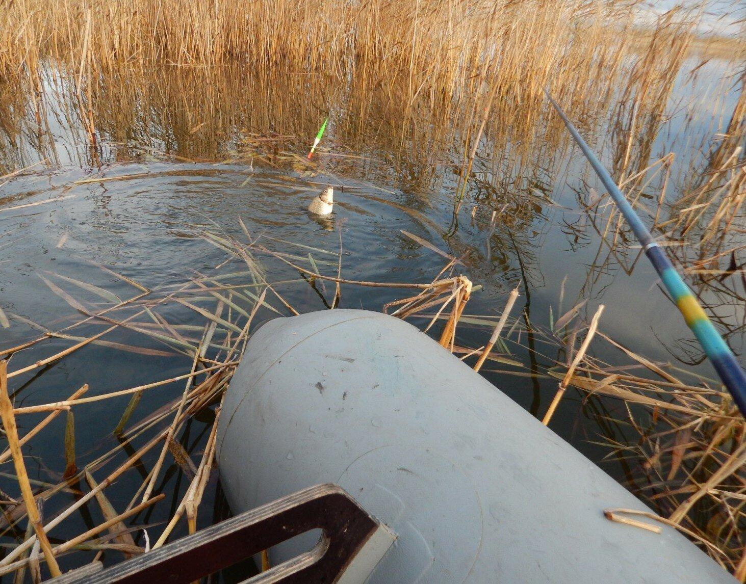 рыбалка в тюкалинском районе омской области 2016